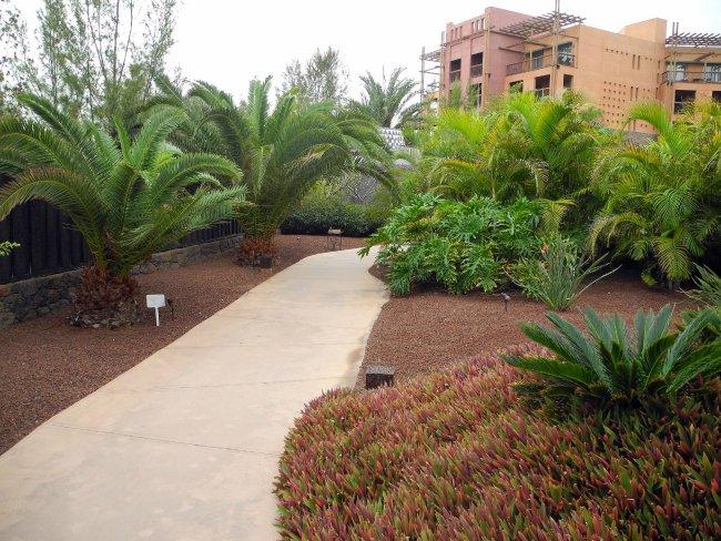 Exotische pflanzen hotelbild hotel lopesan baobab resort for Exotische hotels